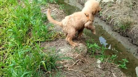 跳过水坑果邊