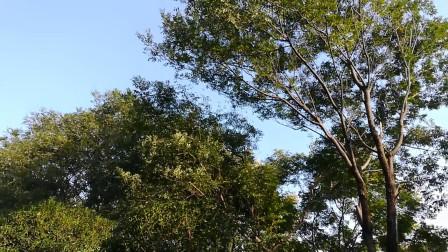 兰州阿楠葫芦丝打跳欢歌。0