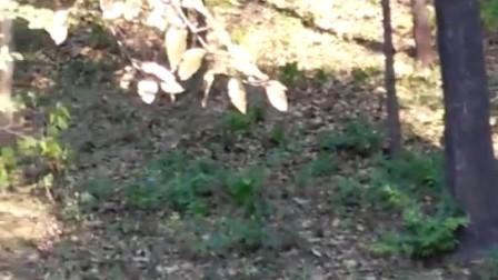 营院里住进了小松鼠