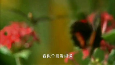 新歌知音推荐《新鸳鸯蝴蝶梦》丹帝(枫林听雨)演唱