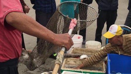 男子海中捕捞大量鱼