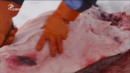 [003_00082][tudou]【纪录片】美食的诞生:生命的礼物 肉类