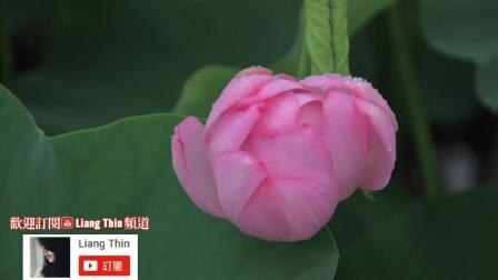 [004_00076][tudou]最好聽的台語歌 [精選台語懷舊老歌] 經典抒情老歌💙高音質Best Taiwan Classic Music