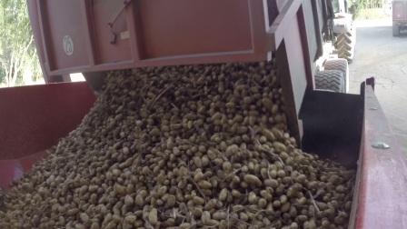 格立莫马铃薯仓储出入库机械作业视频2017