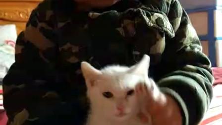 萌猫萌宝海草舞!快来围观吧😄