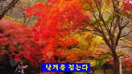 내장산 - 김용임
