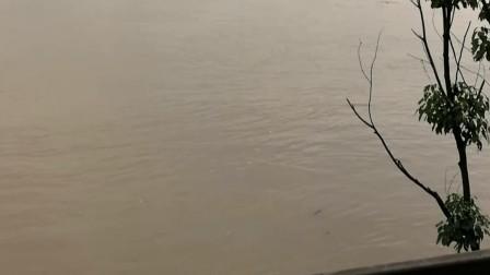 2017年夏水淹山水洲城
