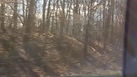 美国森林中穿越的高速