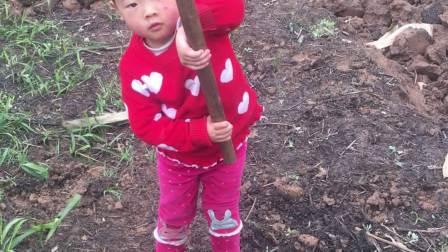 大足三驱三岁宝宝在挖土