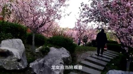 爱剪辑-越剧《红楼梦》之游园_标清