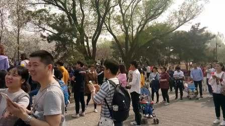 玉渊潭公园落英缤纷_20180401