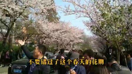 鸡鸣寺樱花大道赏樱