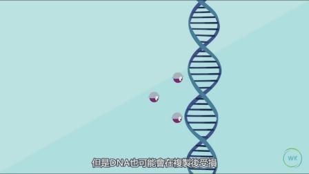 当你的DNA损伤后会发生什么?