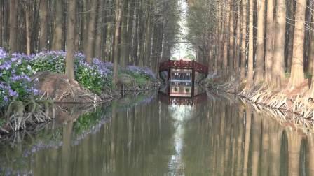 """美景美在""""个""""""""特""""""""奇""""(第二集)  树林长水上"""