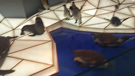 企鹅海狮video_20180424_153410