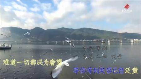 海鸥飞- 龙梅子