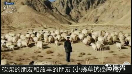 砍柴的朋友和放羊的朋友
