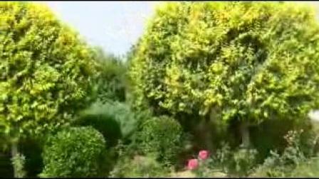 漫步邱县公园(加外景):河北视频1