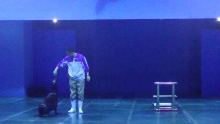 海洋馆海狮表演