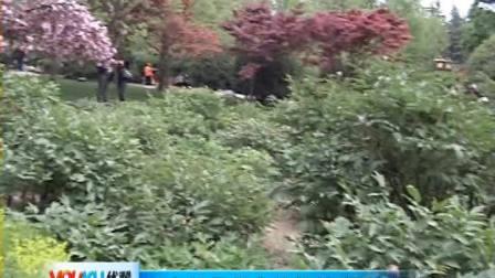 【拍客】西安牡丹花含苞待放 提前欣赏