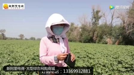 棉花打顶机操作方法_腾讯视频 (1)