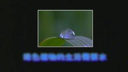 绿色植物的生活需要水