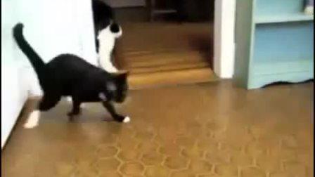 猫咪喝高了