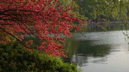 夕阳下浪漫的西子湖;【苏堤春晓】