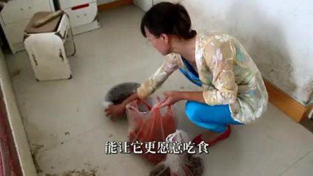 第八届新蕊杯参赛作品纪录片《流浪》范东旭
