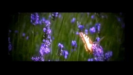 我在蝴蝶飞飞 02截取了一段小视频