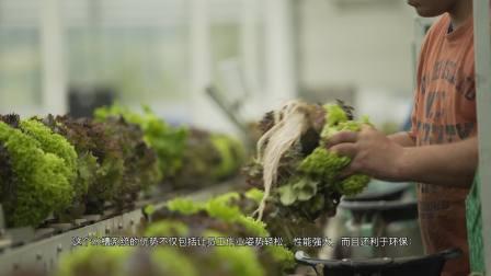 科迪马Codema : NFT移动式种植槽水培生菜系统 @ Meier