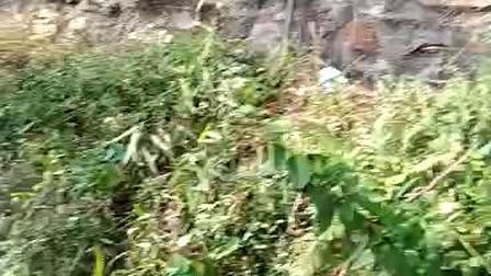 广西北流平政木偶戏