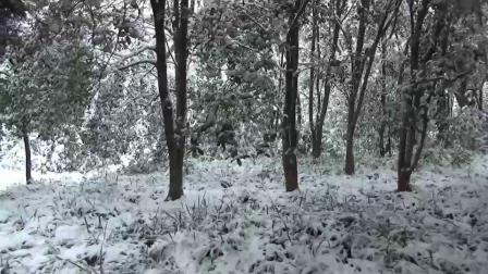 雪中灵谷寺