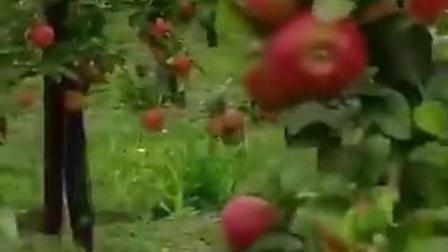 立体身临其境 苹果园