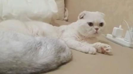 会说话的猫,刘二豆又来了:喵生如此艰难…