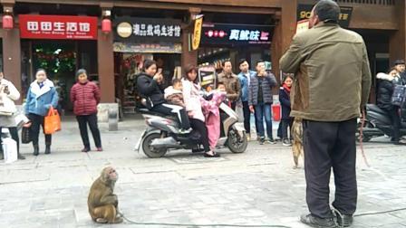 优酷自媒体: 许昌南大街古城民间耍猴艺人
