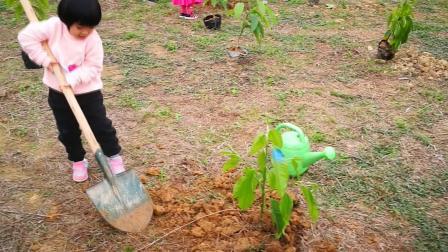 到高明盈香生态园参加植树活动