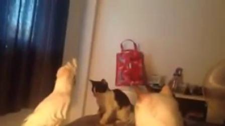 [K分享] 猫都傻了!当鹦鹉学会猫叫