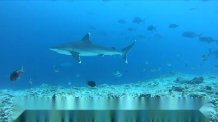 2019虎鲨岛潜水