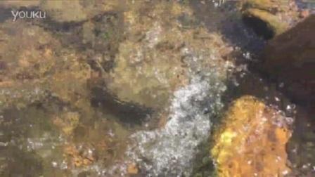 我在流水声截取了一段小视频