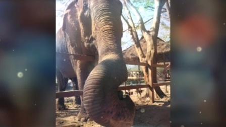 2020-02-09 泰国清迈大象保护园