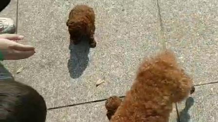 可爱的狗狗1