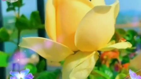 《女人是世界最美丽的花》