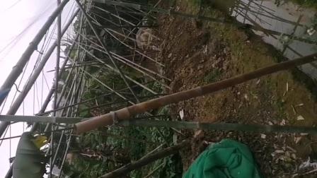 广州农民生活纪实录