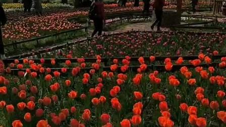 2020庚子年植物园。