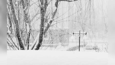 大雪寄哀思
