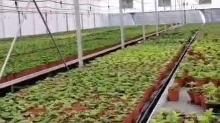昆明基地42米移动苗床-耐用性左右移动苗床-加工厂