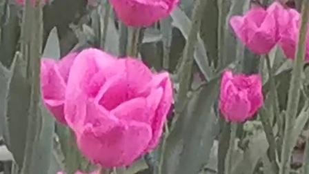 春天花儿香