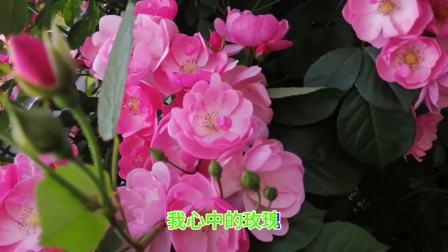胡中平《心中的玫瑰》
