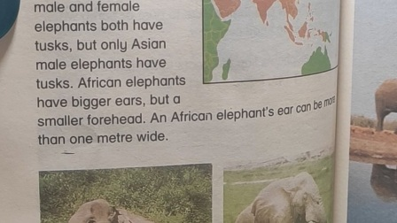 20200524 Elephants